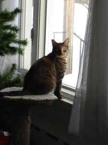 Georgia kitten